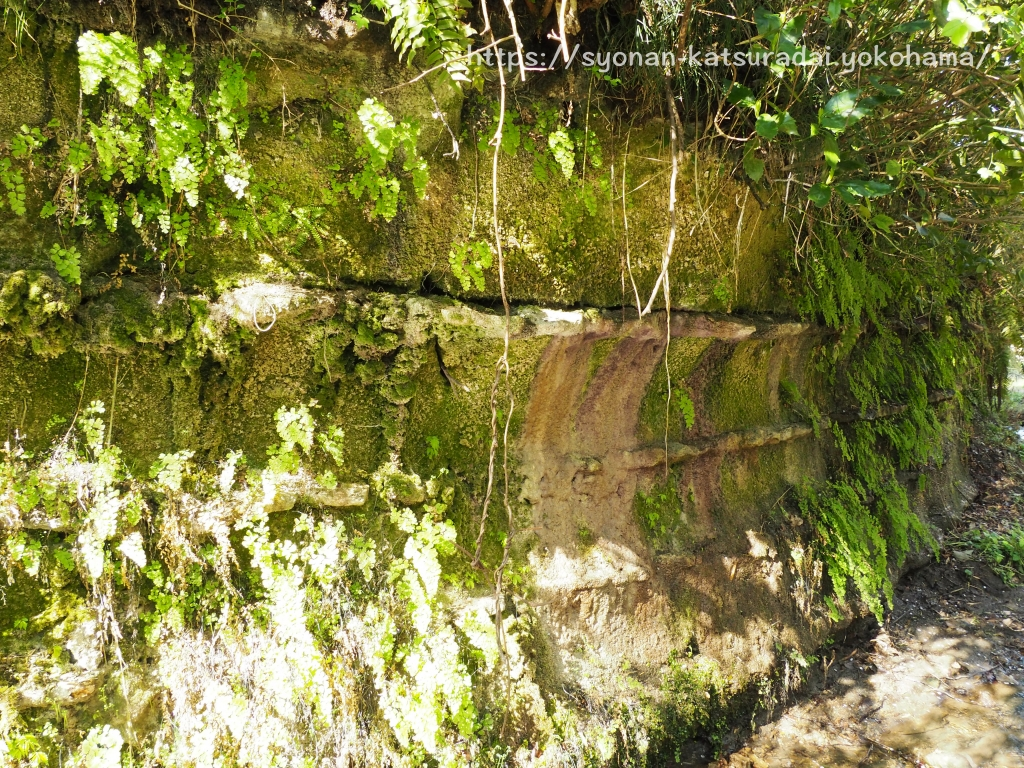 荒井沢市民の森の地層