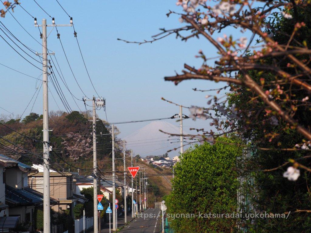 上郷公田線の桜と富士山