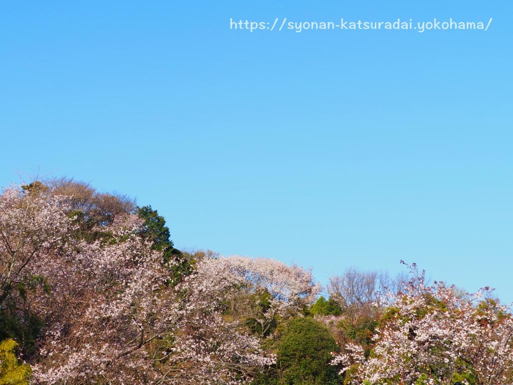湘南桂台から皆城山展望台の方向